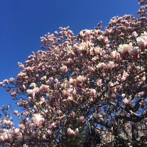 The Year of the Magnolia